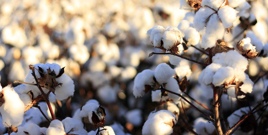 Best Organic Cotton Yoga Mat Reviews